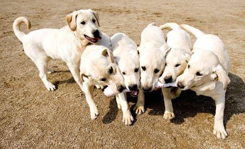 13個你不知道但應該要知道的重要狗狗知識!男生一定要知道#11!