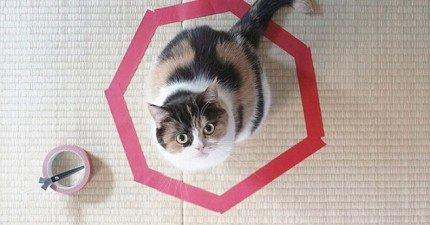 心理學家嘗試解開千萬人的疑惑:貓咪到底為什麼喜歡被困在這些圈圈裡面?