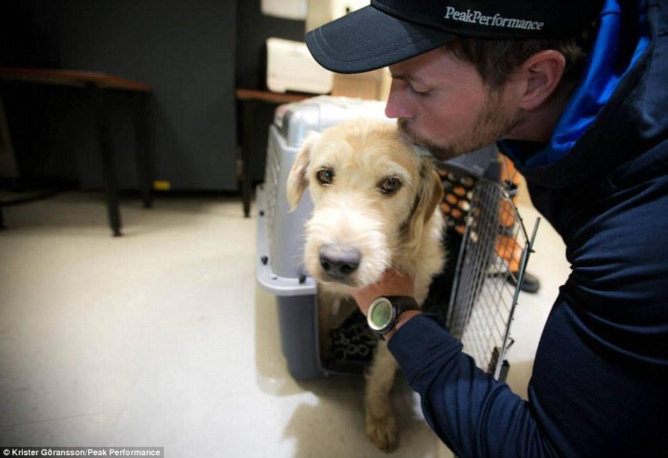 這隻有著最悲慘身世的流浪狗,最後有一個令人難以置信的美滿結局。