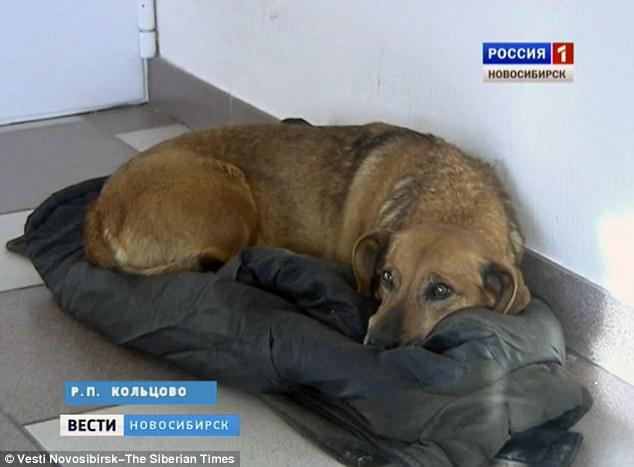 這隻忠犬2年來每天都去醫院苦苦等待主人,背後的故事讓人忍不住掉淚。