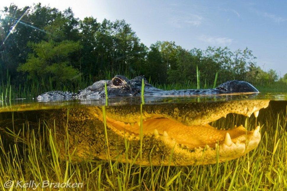 美國 佛羅里達大沼澤地 The Everglades in Florida