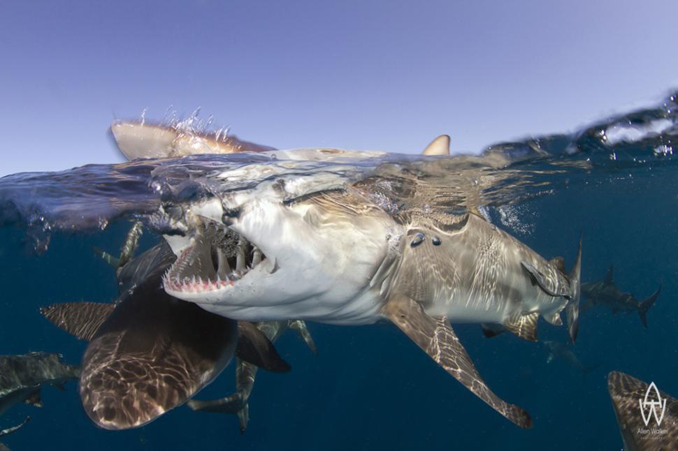 南非的鯊魚公園 Shark Park in South Africa