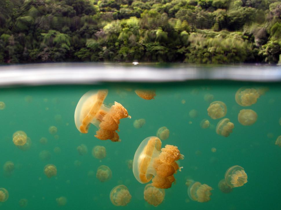 全球34個海平面下最驚人的自然美景。這些罕見的景象真的讓我大開眼界!