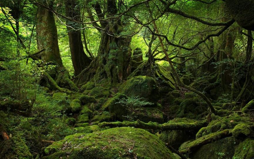 #6 自殺森林