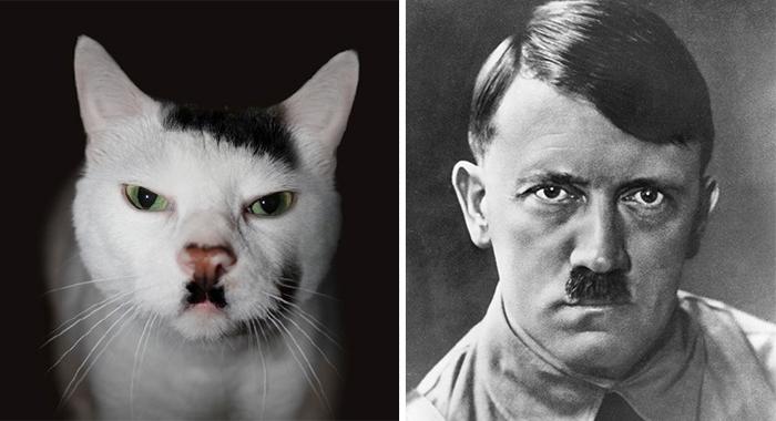 20隻長得有點太像其他東西的貓咪。