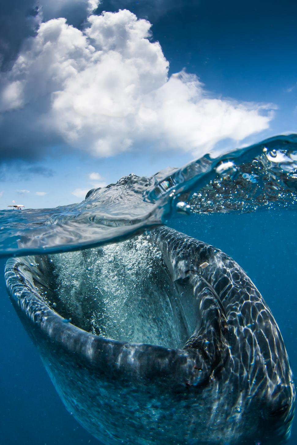 墨西哥 加勒比海 Caribbean Sea, Mexico