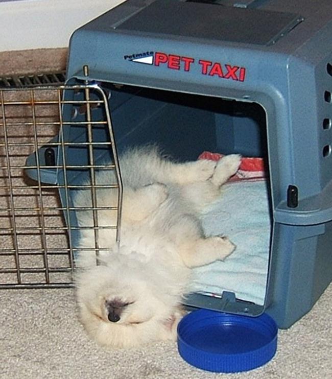 18個找到最不可思議睡覺姿勢的爆笑狗狗。