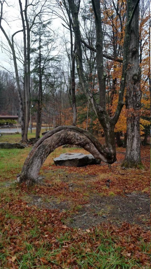 還有這顆根本是生來要給人拍照的樹。