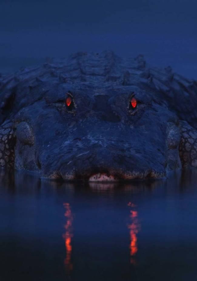 在漆黑沼澤裡拍到的微微火光到底是什麼?!近看完全把我嚇一大跳!