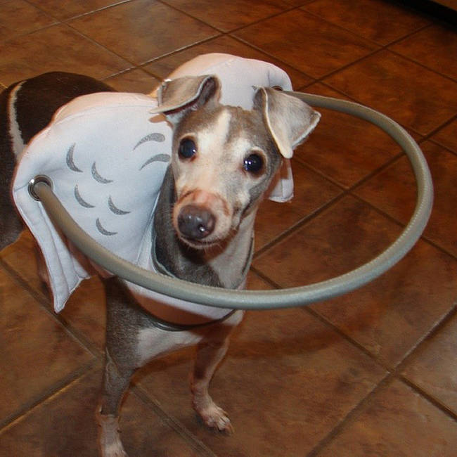 這些狗狗頭上的天使光圈不是為了可愛,而是讓失明的狗狗能重獲視力。