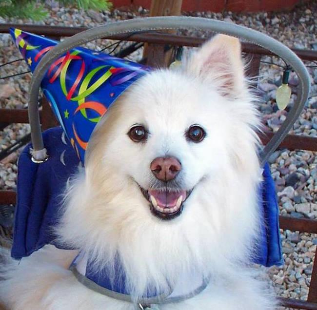 我们也衷心地希望失明的狗狗也能找到爱他疼他的主人。