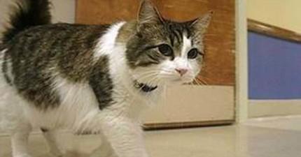 這隻療養院的貓咪傳聞有一個很可怕的能力,每當有病友將離世時,他都會有特別的舉動。