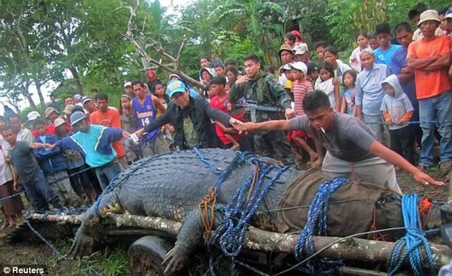 他们没有将鳄鱼杀死,反而送到了附近南阿古桑省 (Agusan) 新开张的生态观光园区。当然,他们也要先好好地拍些照片在说。