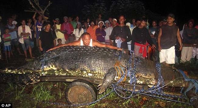 他们试图要设下陷阱捕捉鳄鱼、并把他从他躲藏的小溪中抓出来,在一整天的努力后,这群人终于把鳄鱼五花大绑,然后把他用起重机放到卡车的后头。