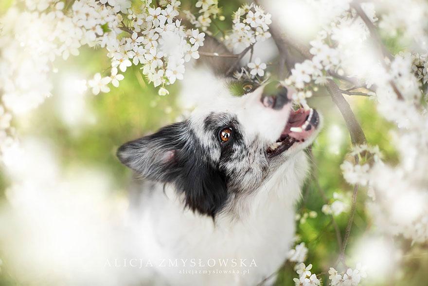 19歲年輕攝影師竟然能將狗狗拍得如此唯美,是我看過最感動人心的照片!
