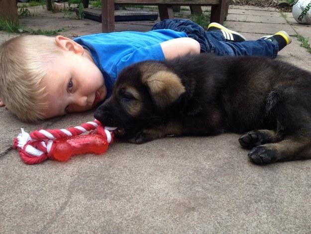 18隻萌翻的小小狗第一天工作的模樣,會讓你一整週的心情都很好!