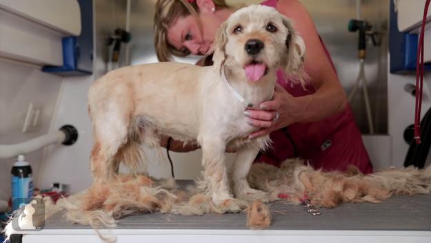 他們剃掉這隻狗狗身上的髒毛在底下找到的東西,讓我的眼眶泛淚!