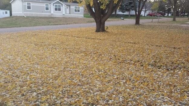嗯...你覺得我們應該要把外頭地上那層落葉鋪成的美麗地毯...清理掉嗎?