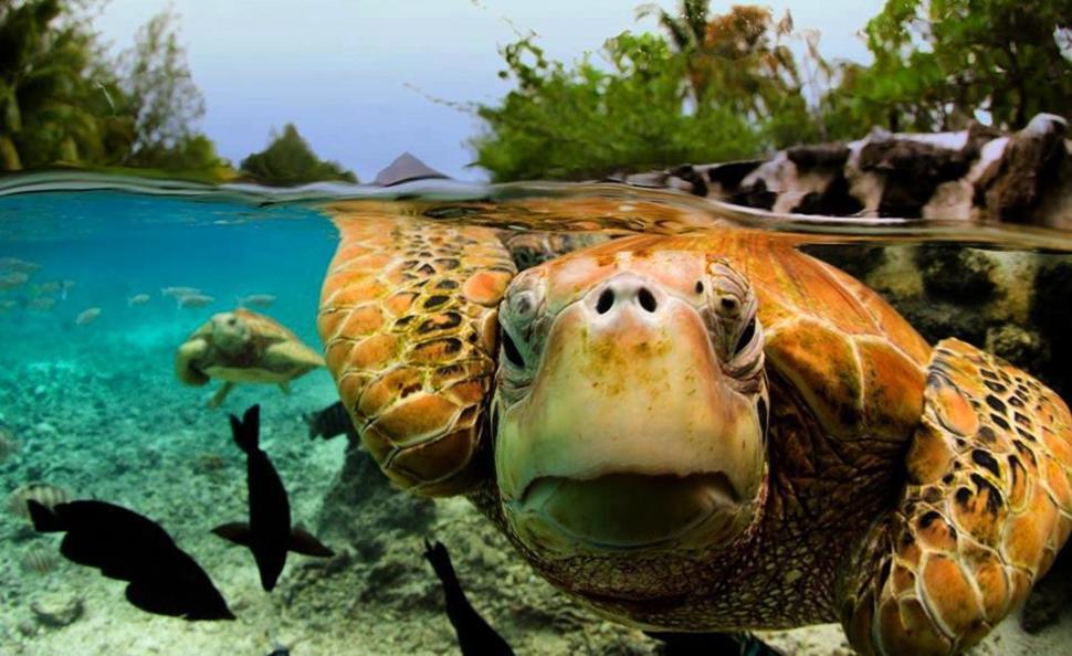 波拉波拉島 Bora Bora