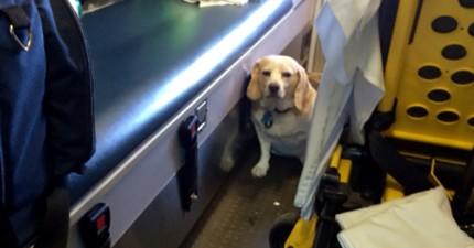 主人被救護車送醫,這隻小狗接下來做的事情讓他變成網路大明星。