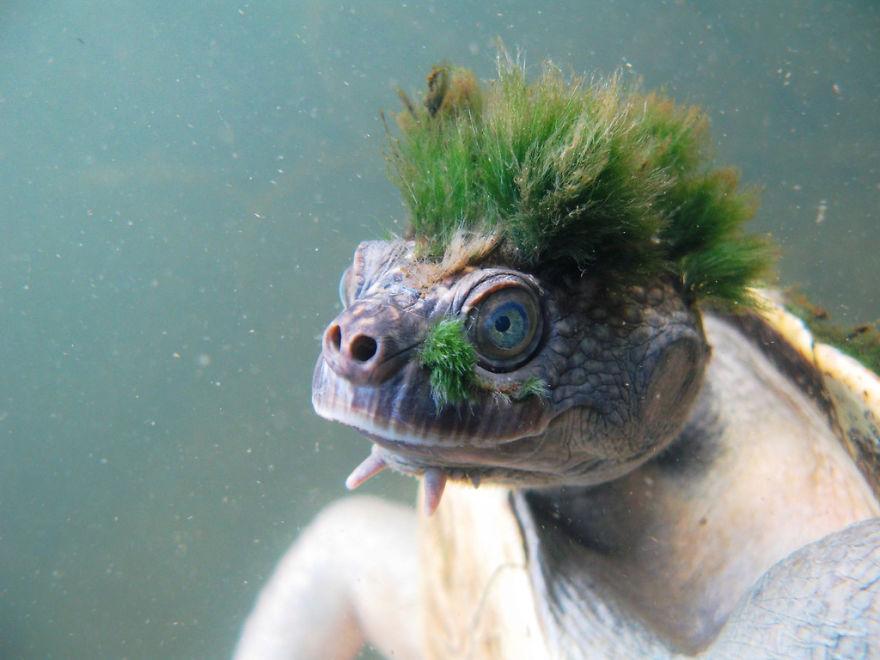 20種經投票選出世界上毛髮最華麗的爆可愛動物。