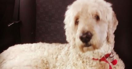 這個主人很好奇他出門時,家裡的狗狗到底在做什麼。沒想到他拍到的影片讓他心都碎了。