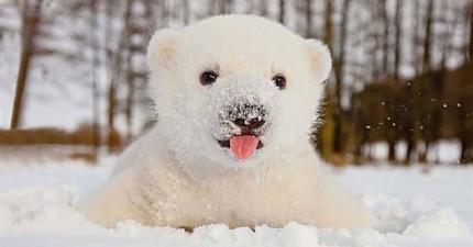 15張小動物初次玩雪的萌翻照片會把最冷酷的心都融化掉!