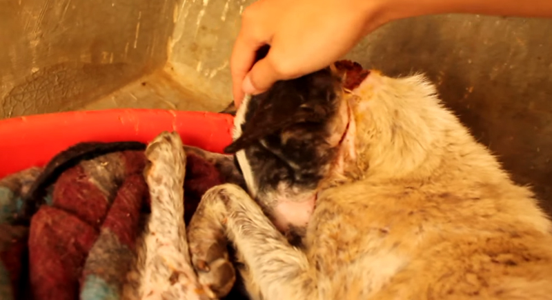 這隻可憐的狗狗被多年虐待到身心崩潰,但她最後遇到的轉機讓她重獲生命!