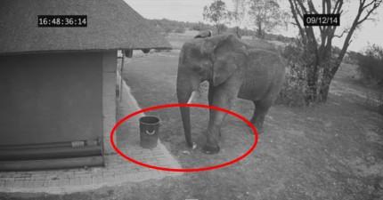 我們全世界每個人都應該要跟這頭大象學習。