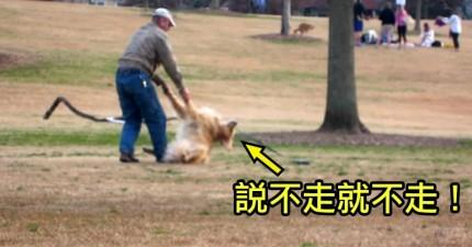 這隻世界上最懶的狗就是賴在公園不走,直到他的主人想到一個天才的圈套。