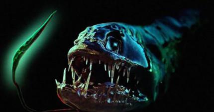 10個比噩夢還要噩夢的深海生物,證明海裡的動物才是最恐怖的。