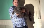 貓咪掉落時平衡機制都會讓腳先著地,但如果是13公斤的大肥貓呢?