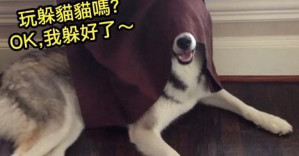 2014年度最經典搞怪狗狗爆笑排行榜!