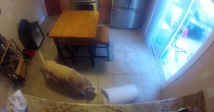 狗狗單獨在家的時候做的事情