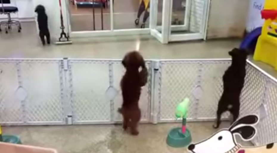 這隻狗狗太久沒有看到主人,看到時,他表現出的舞步讓我好慚愧。