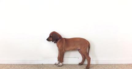 這隻狗狗在23秒內成長到3歲的縮時影片會打動每個愛狗之人的心。