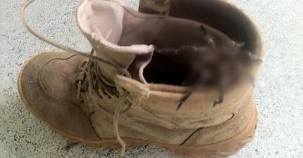 這個鞋子裡面的惡夢,會提醒你去澳洲之前一定要先三思!