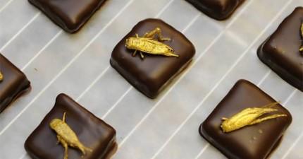 15個世界各地最美味的蟲蟲美食。