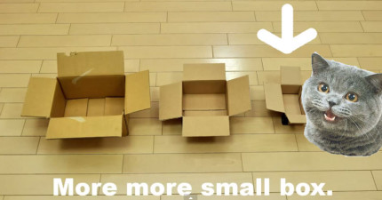 如果盒子太小了,貓咪還是會想要鑽進去嗎?