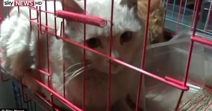 中國有上千隻貓遭到偷竊,貓主人主動出擊竊賊巢穴才發現黑暗的真相。