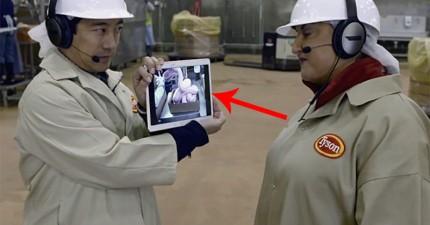 麥當勞忍無可忍將「麥克雞塊」製作過程及原料解放!