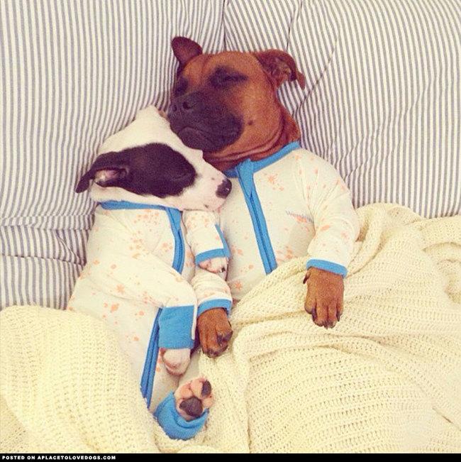 如果還是覺得冷,那就跟心愛的人窩在一起睡吧!
