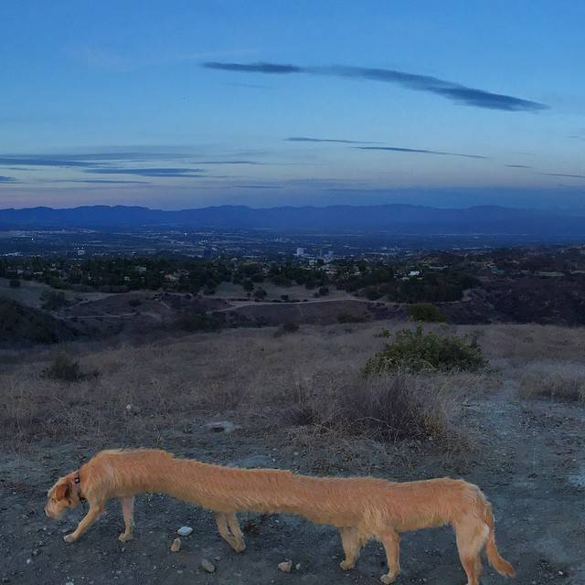 15張提醒你「絕對不要用全景模式」拍攝家裡可愛的狗狗 頭消失一半還不是最慘XD
