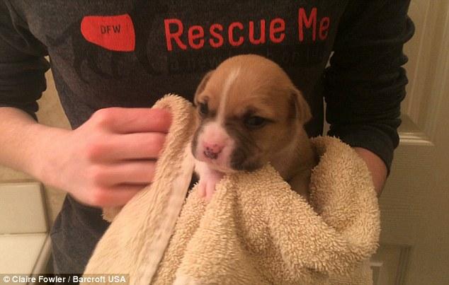 這隻超可愛在享受洗澡的狗寶寶背後有一個你必須要知道的黑暗。