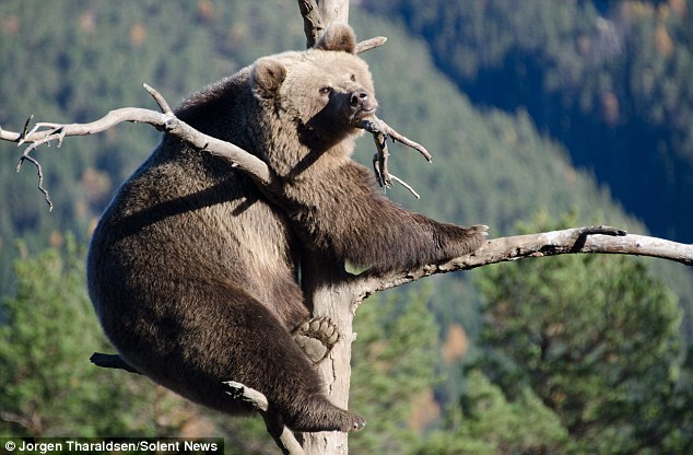 我應該沒看錯吧?有人在樹上看到這麼奇妙的景象,馬上把他拍下來。