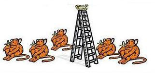 心理學家用「5隻猴子」的簡單實驗 真實反映出「人類最大問題」被讚爆!