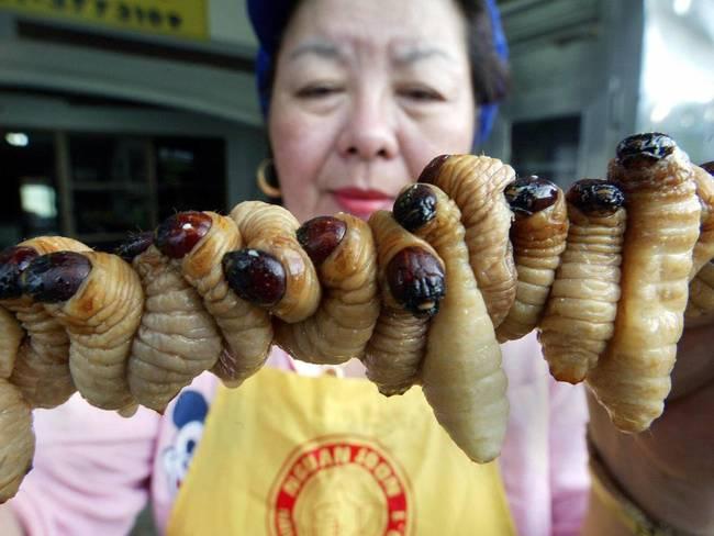 5.) Silkworms