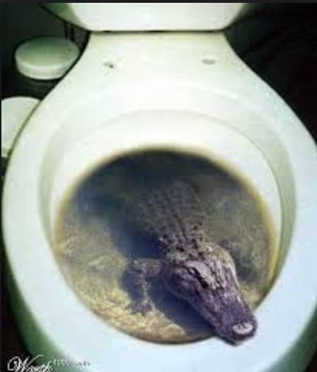 17個事實證明廁所真有可能是你家中最危險的地方!