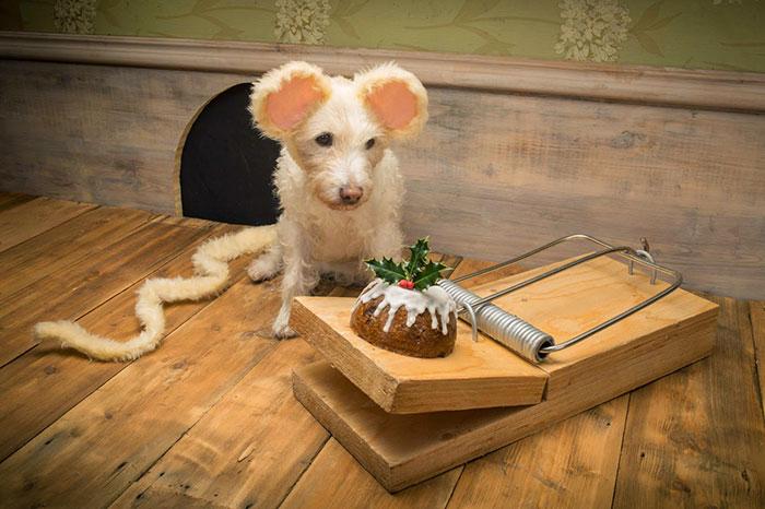 每年的聖誕節,這個狗爸爸都會把狗狗打扮成其他可愛動物做成聖誕卡。