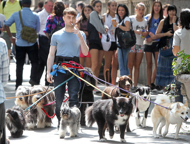 丹尼爾雷德克里夫 (Daniel Radcliffe) 在紐約街頭一次遛一堆狗。